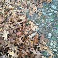 Ozark Autumn by James Pinkerton
