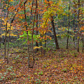 Ozark Forest In Fall 1 by Greg Matchick