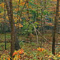 Ozark Forest In Fall 2 by Greg Matchick