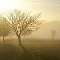 Ozarks Misty Golden Morning Sunrise by Jennifer White