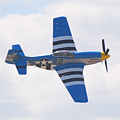 P-51 Mustang American Rose by Larry Keahey