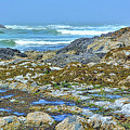 Pacific Coast Tide Pools by Alan Steele