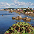 Pacific Grove, Ca by Janine Moore