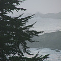 Pacific Grove Early Am by Donna Thomas