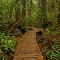 Pacific Rim National Park Boardwalk by Adam Jewell