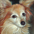 Paco The Papillion by Portraits By NC
