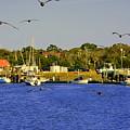 Paddle Boarders Vs Birds by Lisa Wooten