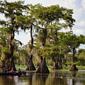 Paddling In The Bayou by Lana Trussell