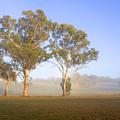 Paddock Sunrise by Mike  Dawson