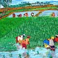 Paddy Planters by Narayan Iyer