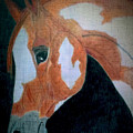 Paint Horse Color Pencil by LKB Art and Photography