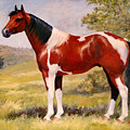 Paint Horse Gelding Portrait Oil Painting - Gizmo by Kim Corpany