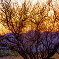 Painted Branches Of A Desert Tree At Sunset by Bonnie Follett