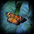 Painted Butterfly by Skip Willits