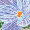 Painted Crocus by Lewis Lowell