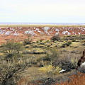 Painted Desert Winter 0571 by Sharon Broucek