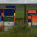 Painted Hives by Whispering Peaks Photography