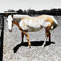 Painted Horse II by Douglas Barnard