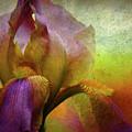 Painted Iris by Sari Sauls