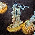 Painted Jelly by Bobby Miranda