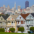 Painted Ladies by Jack Schultz