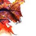 Painted Leaf Series 1 by Anita Burgermeister