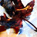 Painted Leaf Series 2 by Anita Burgermeister