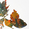 Painted Leaves Abstract 1 by Anita Burgermeister