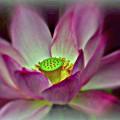 Painted Lotus by Nona Kumah