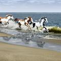 Painted Ocean by Barbara Hymer