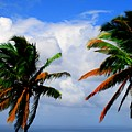 Painted Palm Trees by Perry Webster