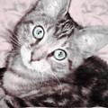 Pastel Bengal Kitten by Alicia Hollinger