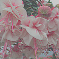 Painted Pink Fushia by Tina M Wenger