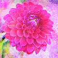 Painted Pompom Dahlia With The Works by Anita Pollak