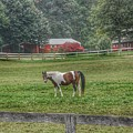 1005 - Painted Pony In Pasture by Sheryl Sutter