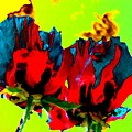 Painted Poppies by Will Borden