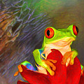 Painted Red Eyed Tree Frog by Mary Lou Chmura