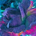 Painted Silk by Gwyn Newcombe