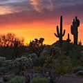 Painted Skies Of The Sonoran Desert by Saija  Lehtonen