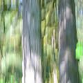 Painted Streaked Trees by Tikvah's Hope