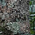 Painted Treebark Woodcut by David Lane