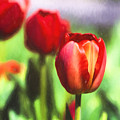 Painted Tulips by Terry Weaver