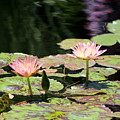 Painted Waters - Lilypond by Colleen Cornelius