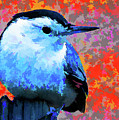 Painted White Breasted Nuthatch by Tim Kathka