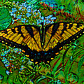 Painted Yellow Swallowtail by Stephen Whalen