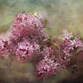Painterly Lilac Blossom Photograph by Clare VanderVeen