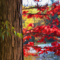 Painterly Rendition Of Red Leaves And Tree Trunk In Autumn by Randall Nyhof