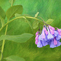Painterly Virginia Bluebells by Isabela and Skender Cocoli