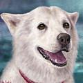 Painting Of A White And Furry Alaskan Malamute by Idan Badishi