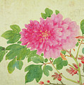 Painting Of Peonies by Jiang Yu